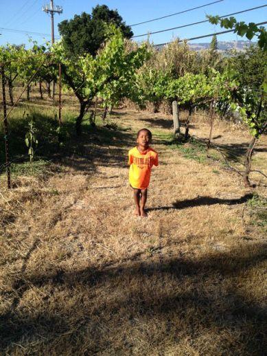 denmanranch-boy-vineyard