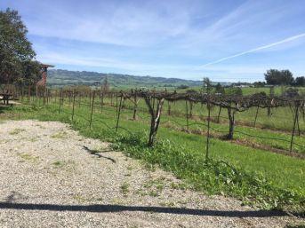 denmanranch-vineyard